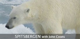 Polar Bear by guide John Coons
